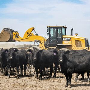 Cat equipment behind livestock on a farm