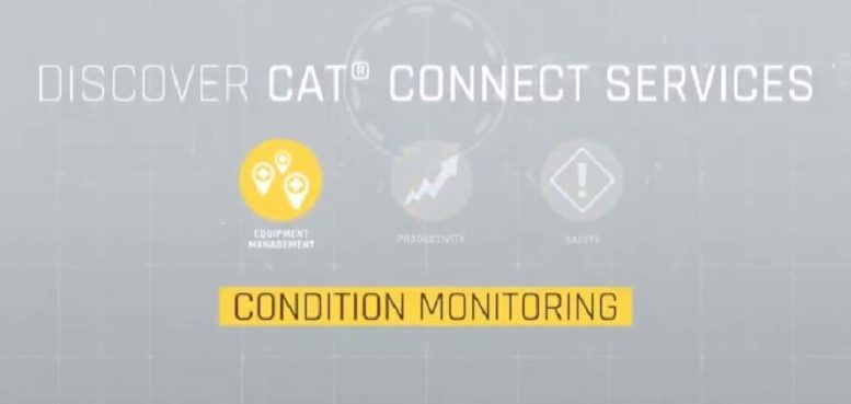 Cat Connect Conditioning